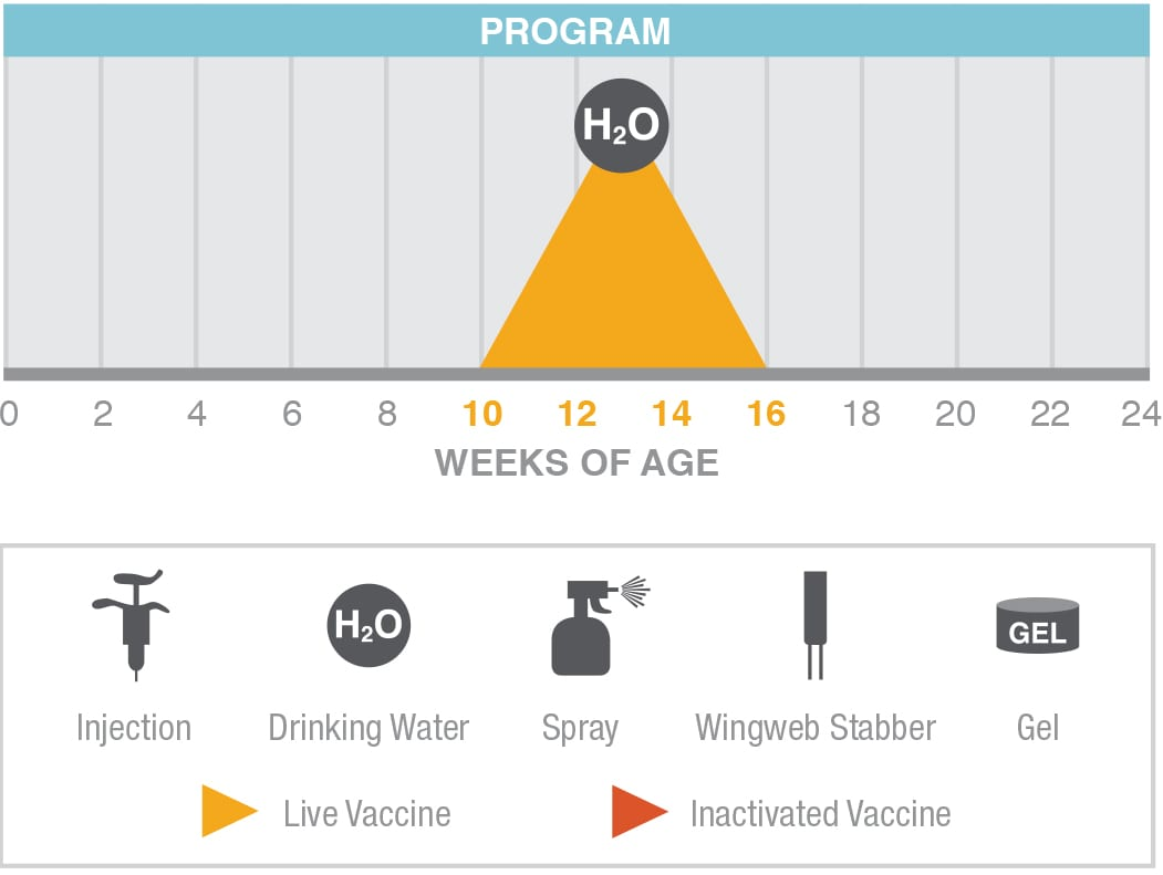 AE-Vac program
