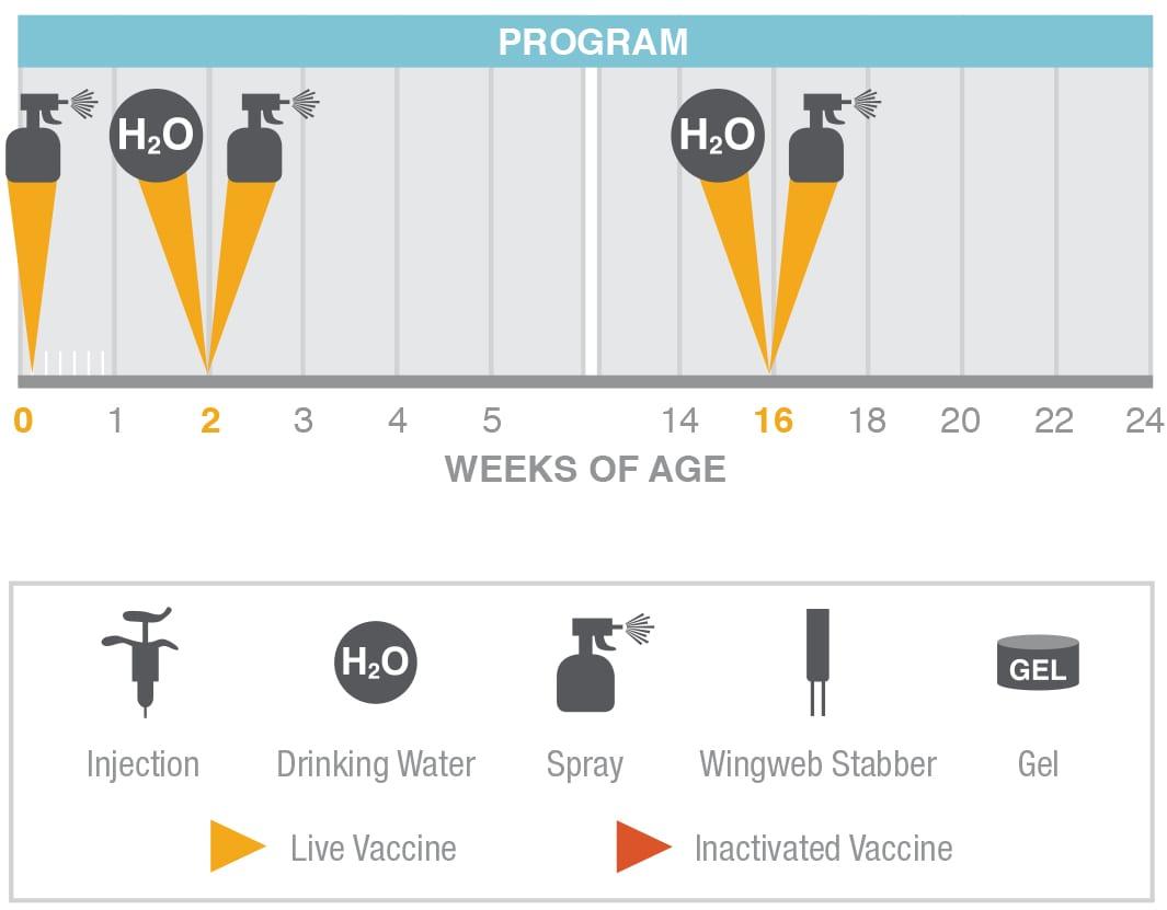 Megan Vac 1 Vaccination Program