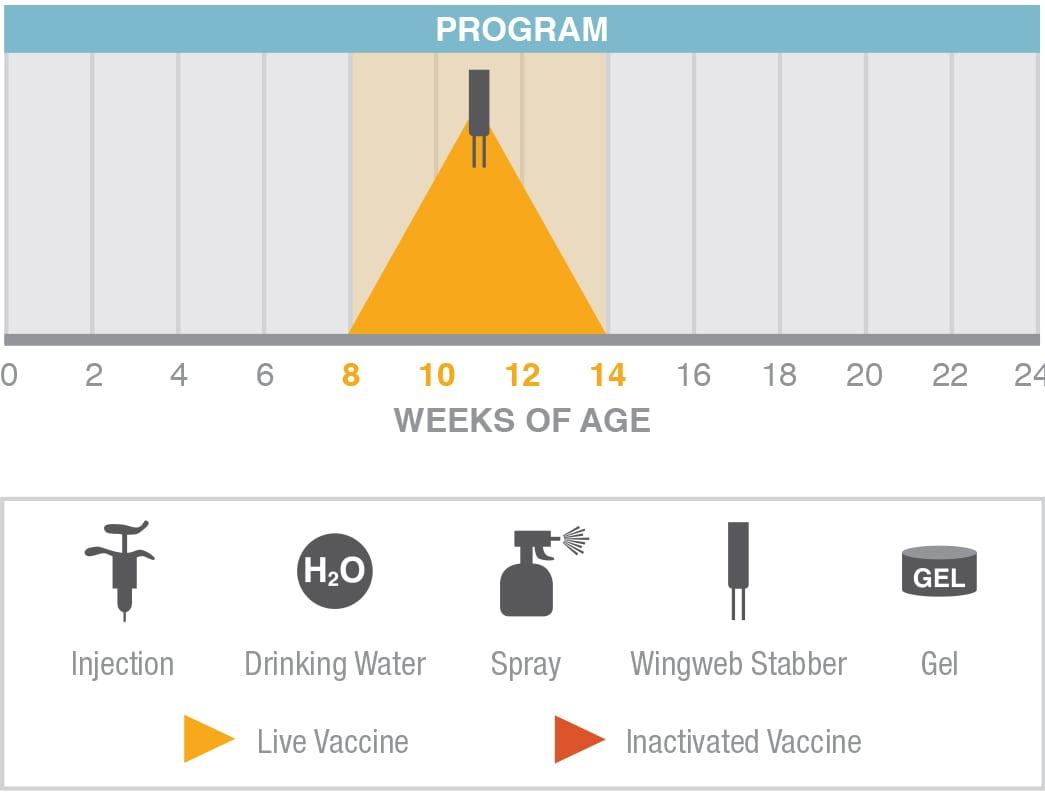 AE Poxine Program